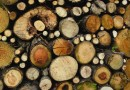 Calling time on illegal logging | Special report – EU timber regulations